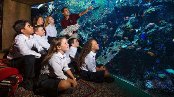Behind the scenes at the Fish Hospital at Atlantis Dubai